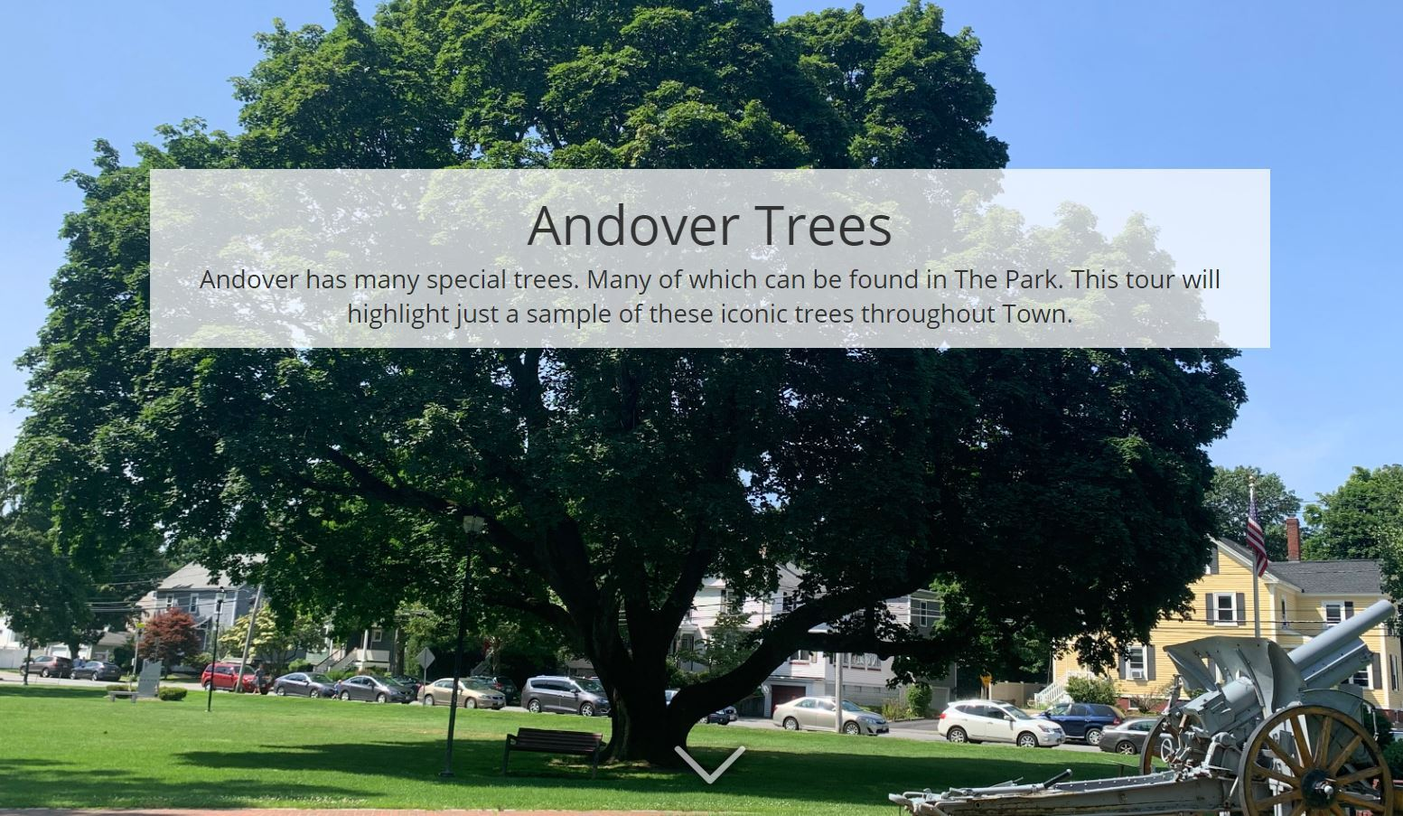Andover Trees Photo Gallery Link